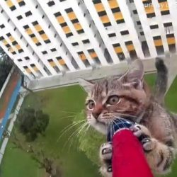 Cat trapped and saved from falling off high rise building