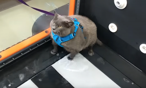 Fat cat lacks motivation to lose weight