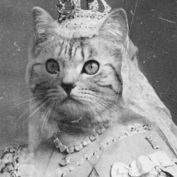 Female cat as a queen