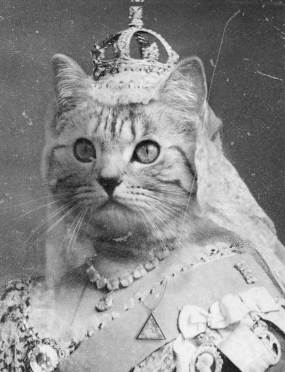 Female cat as a queen