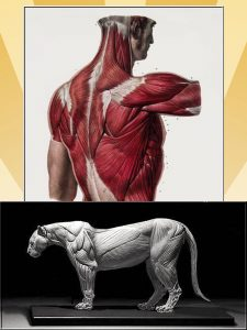 Do cats have more muscles than humans?