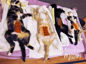 Picture of feral female cats waiting to be spayed taken from Spokane home scheduled to be demolished