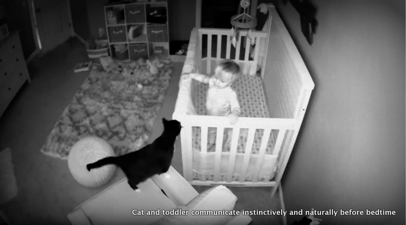 Toddler says goodnight to cat