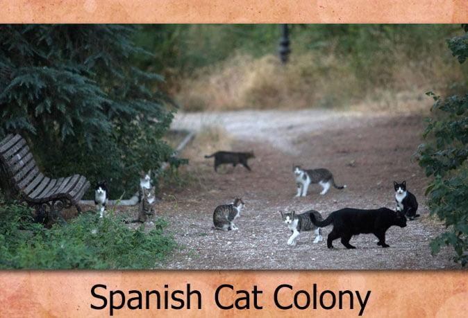 Spanish cat colony