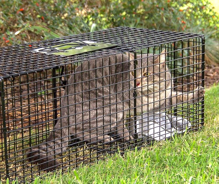 City of Rochelle, Illinois learned from residents that trapping and killing feral cats is unacceptable