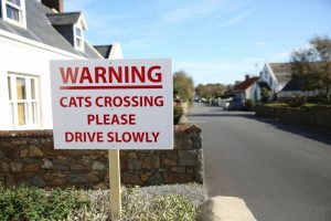 Warning sign to car drivers to slow down as cat crossing the road