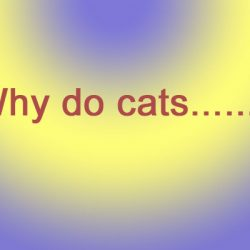 Why do cats?