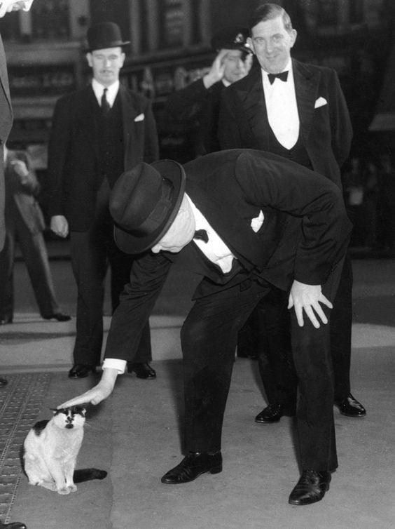 Winston Churchill pets a cat, 24th May 1952