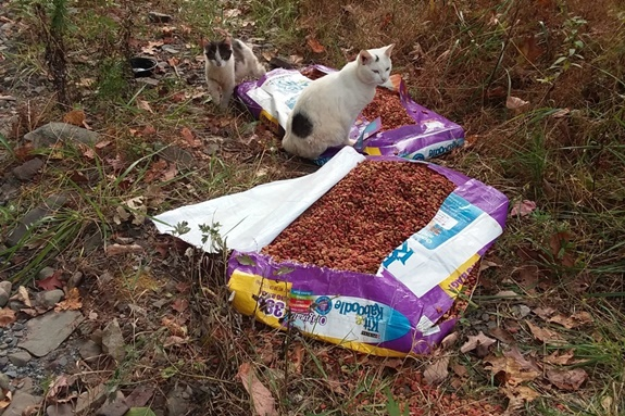 abandoned cats with food