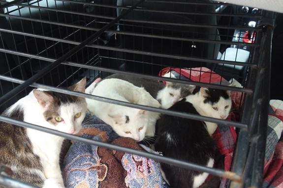 abandoned cats trapped