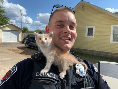 cat rescued by police