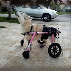 disabled dog found dead