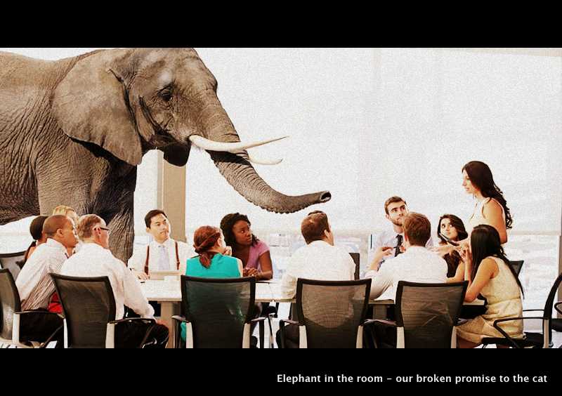 Elephant in the room - our broken promise to the cat