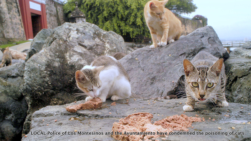 Community cats of Los Montesinos and the Ayuntamiento