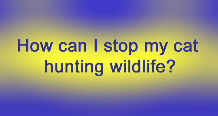 How can I stop my cat hunting wildlife?