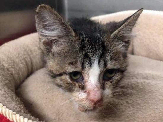 kitten abused