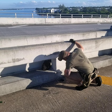 cat rescued from bridge