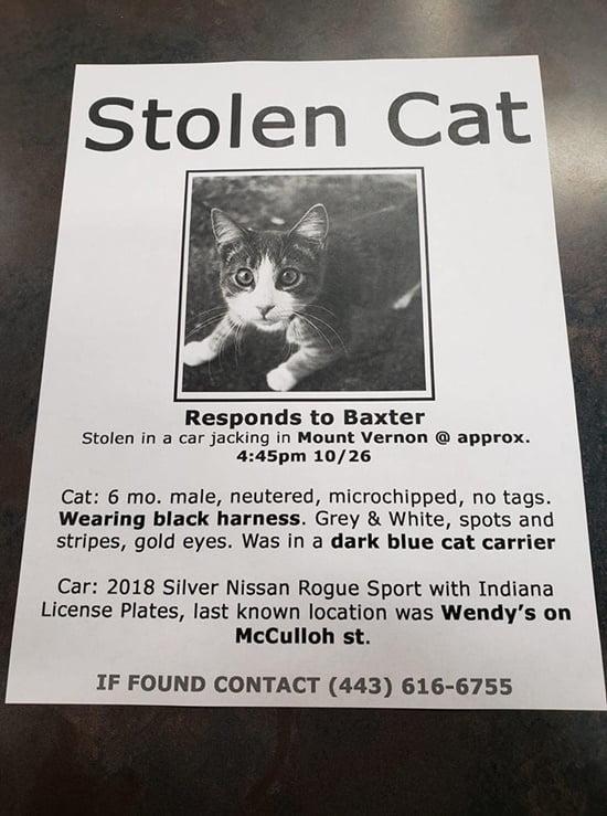 stolen cat poster