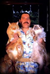 Freddie Mercury with two of his cats
