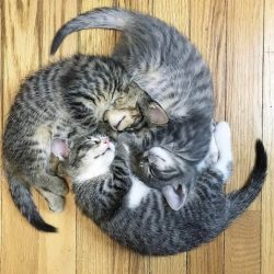 Spinning wheel cats image