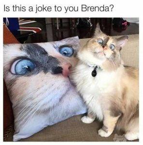 Cat pulls a funny face