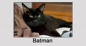 Batman a rescue cat with kidney disease stolen from PetSmart