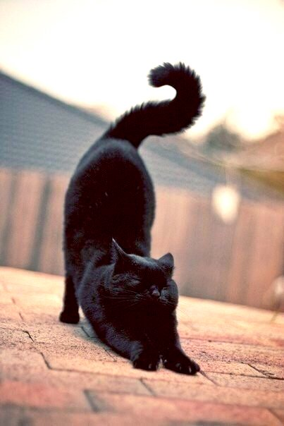 Black cat - great shapes