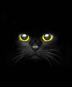 Black cat - stunning eyes