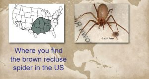 Brown recluse spider distribution
