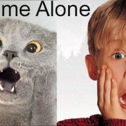 Cat home alone