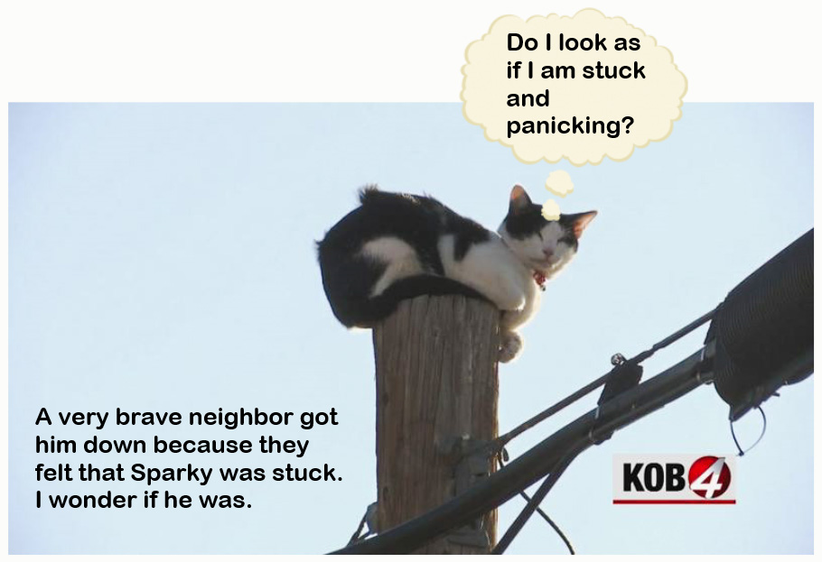 Cat stuck up pole or not?