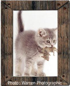 Cat 'tortures' prey