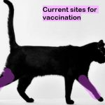 Cat vaccination sites