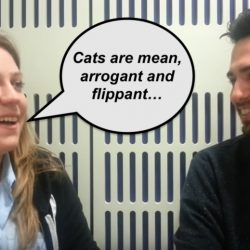 Cats are mean arrogant and flippant