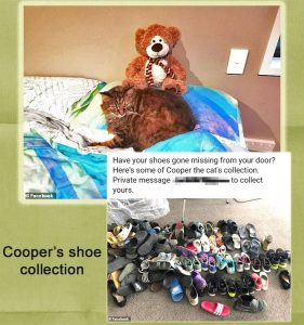 Cooper's shoe collection