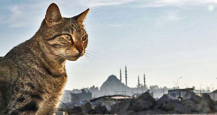 City of Cats - Istanbul