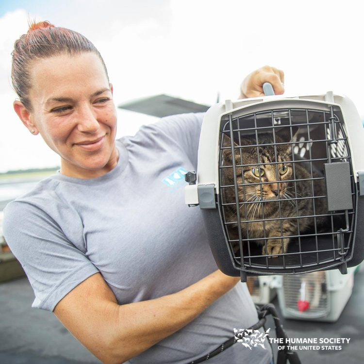 HSUS saving the lives of cats