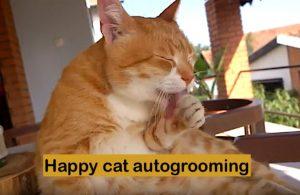 Happy cat autogrooming