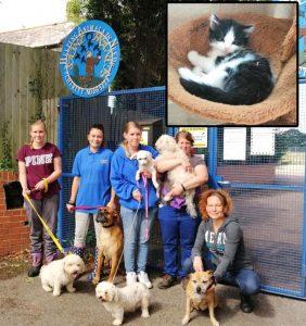 St Francis Animal Welfare in Fair Oak