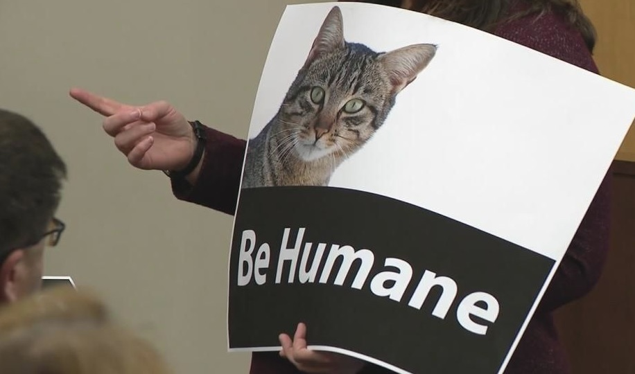 Hilliard County rethinking law to ban feeding feral cats - council meeting