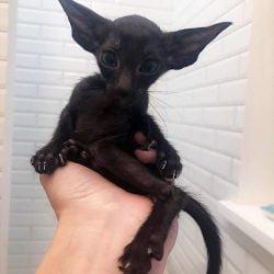 Strange looking kitten