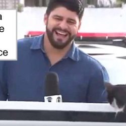 Journalist befriends cat who interrupted his reporting