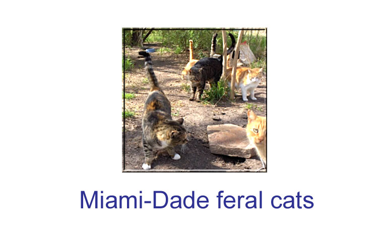 Miami-Dade feral cats
