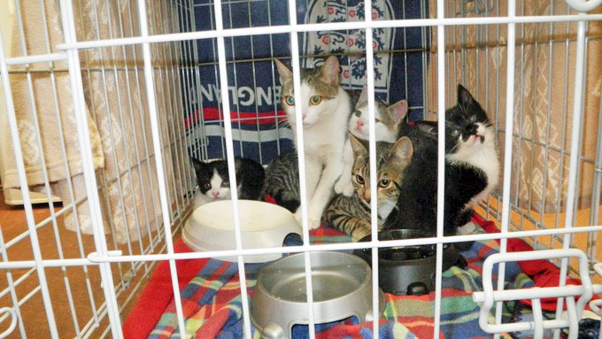 Need a home - Merry Xmas. Please help them. Family of cats abandoned outside a hospital in UK.