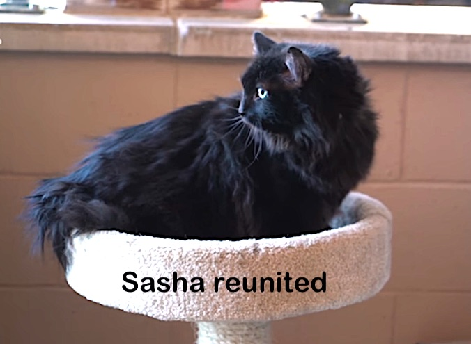 Sasha a cat reunited with owner after being found 1,200 miles away. Photo: Santa Fe shelter video screenshot.