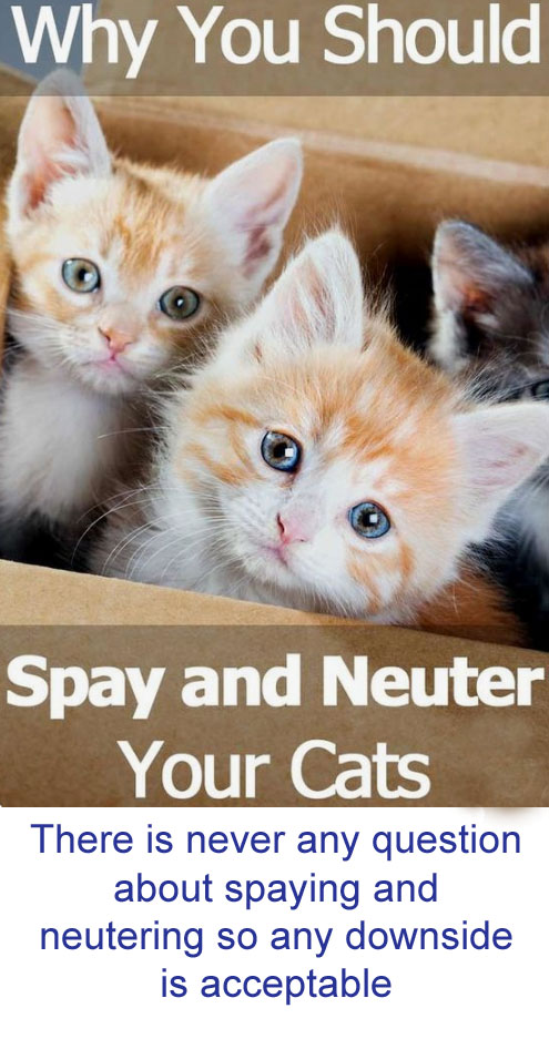 Spaying and neutering puts on weight
