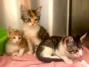 Stray cats dumped outside hospital in Cleveland, OH and the person has an excuse