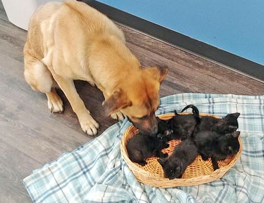 Stray dog keeps abandoned kittens warm in cold Canadian winter weather