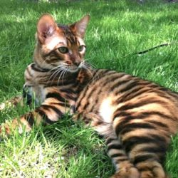 Picture of striped tabby cat