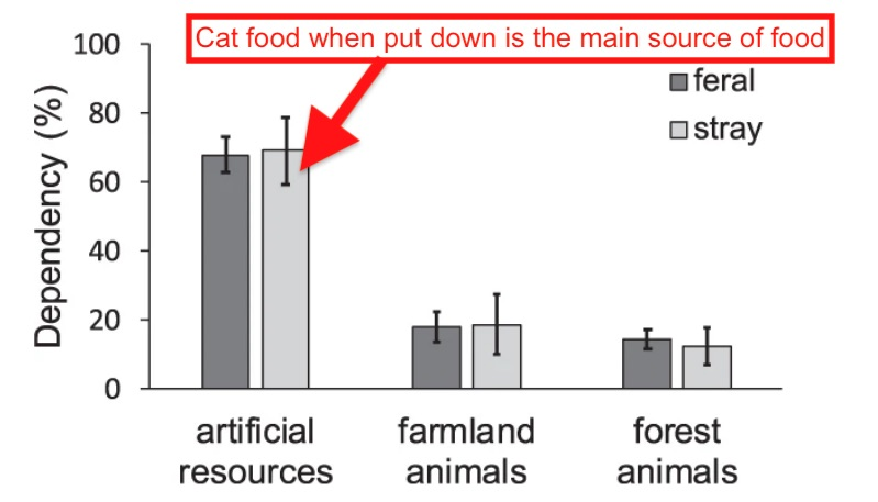 TNR feral cats mainly rely on cat food